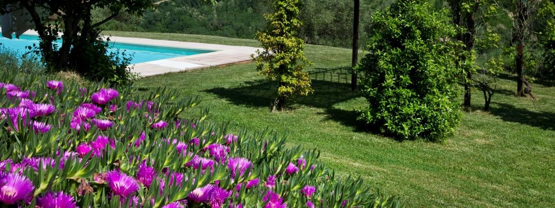 succulents-pool-CDF-9172